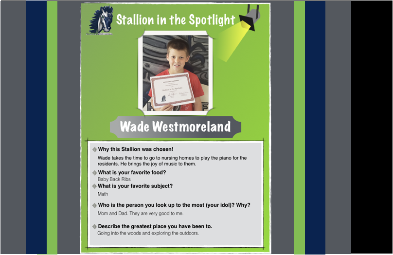 Stallion in the Spotlight – Wade!